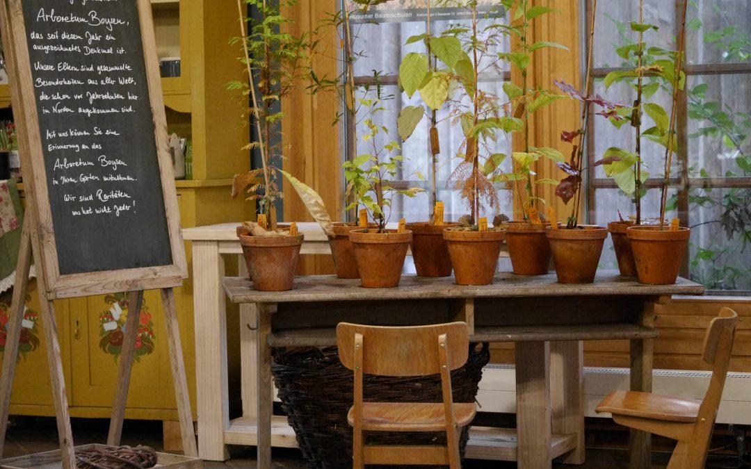 Zöglinge aus dem Arboretum Boysen
